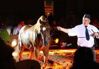 Wieczorna prezentacja koni / The evning preview of sale horses: Lot 3. FALLADA, fot. Irina Filsinger